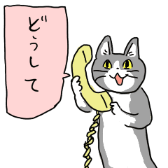 どうして猫.png